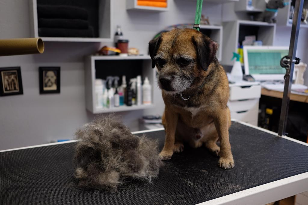 The Groomers Spotlight | Choose a Qualified Groomer For Peace Of Mind